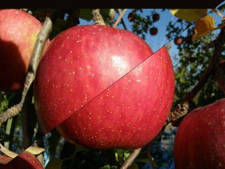 リンゴを斬る